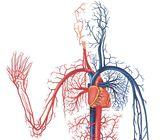 Система крови