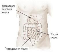 Illu_small_intestine-Russian.JPG