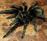 Подтип хелицеровые, класс паукообразные